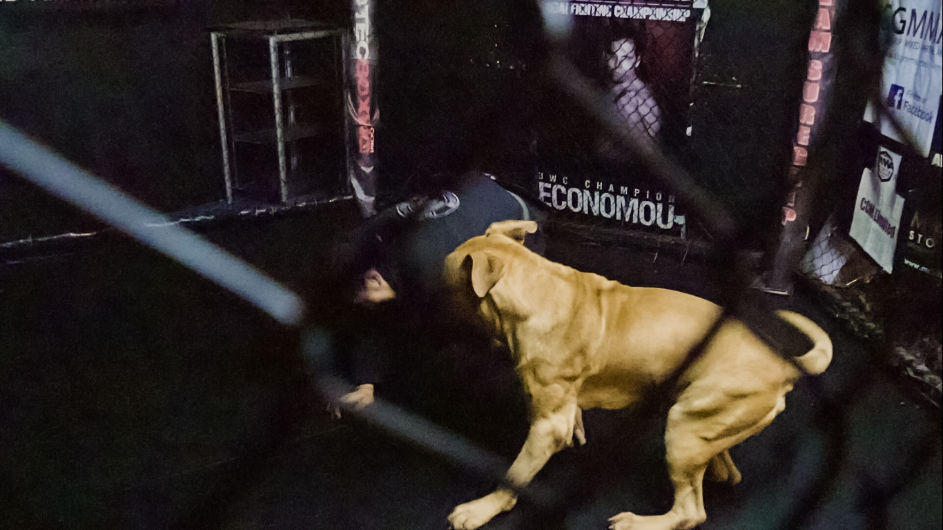 MMA video production